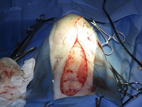 乳腺腫瘍犬6